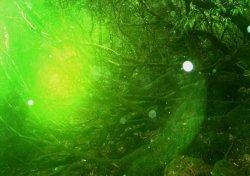 """画像1: @""""緑の森の精霊ポスター""""●B3サイズをプレゼント!"""