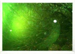 画像1: 緑のオーブポスター最大サイズ●B2 フレーム入り・なし
