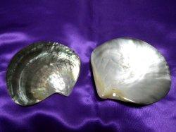 画像3: @お得な★浄化3点セット ホワイトセージ、水晶さざれ、黒蝶貝皿